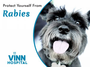 Protect Yourself From Rabies - Vinn Hospital